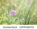 spring rain on the meadow in...   Shutterstock . vector #1294568152