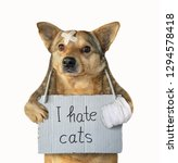 Stock photo the funny mongrel dog with a poster around its neck it hates cats his paw is bandaged isolated 1294578418