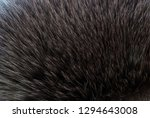 brown and black and white... | Shutterstock . vector #1294643008