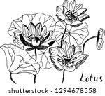 lotus. hand drawn illustration. | Shutterstock .eps vector #1294678558