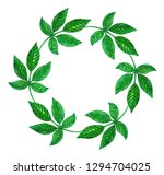 leafs of the plant. circle... | Shutterstock . vector #1294704025