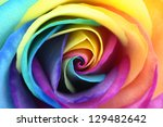 Macro Of Rainbow Rose Flower...