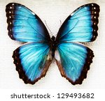Stock photo exotic butterfly isolated on white background 129493682