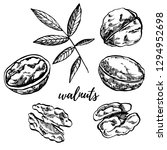 hand drawn sketch style walnuts ... | Shutterstock .eps vector #1294952698