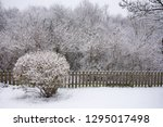 Garden In Winter. Hedge And ...