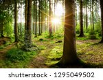 Beautiful Forest With Bright...