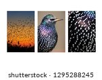 to take a closer look at nature.... | Shutterstock . vector #1295288245