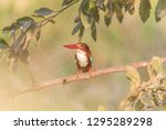 kingfisher colorful. blue green ...   Shutterstock . vector #1295289298