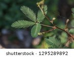 the leaves make food by...   Shutterstock . vector #1295289892