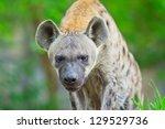 hyena | Shutterstock . vector #129529736