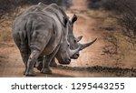 2 Rhinos Walking In The Road