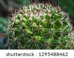 Closeup pricker of small cactus ...