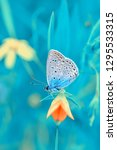 Stock photo closeup beautiful butterfly sitting on flower 1295533315