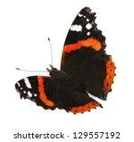 Vanessa Atalanta Butterfly On...