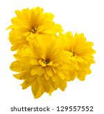 Yellow Flower Isolated On White