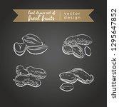 peanut. set of fresh fruits ... | Shutterstock .eps vector #1295647852