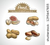 peanut collection of fresh... | Shutterstock .eps vector #1295647855
