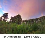 evening summer landscape. park ... | Shutterstock . vector #1295672092