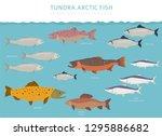 tundra biome. terrestrial... | Shutterstock .eps vector #1295886682