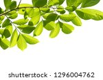 tree branch isolated on white... | Shutterstock . vector #1296004762