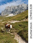cow grazing  montasio plateau ... | Shutterstock . vector #129601328
