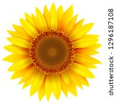 Sunflower Isolated  Vector...