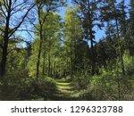 Typical Dutch Forest Landscape...