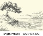 olive tree on sea shore vector... | Shutterstock .eps vector #1296436522