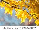 beautiful back lit  yellow... | Shutterstock . vector #1296662032