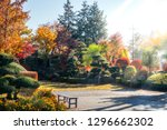 early morning sunrays in a... | Shutterstock . vector #1296662302