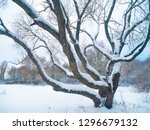 large branchy tree covered with ... | Shutterstock . vector #1296679132