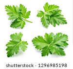parsley. parsley isolated. top... | Shutterstock . vector #1296985198