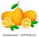 exotic fruit kumquat with green ... | Shutterstock .eps vector #1297026112