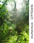 tropical background | Shutterstock . vector #129702656