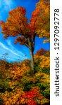 stunning vertical panorama ... | Shutterstock . vector #1297092778