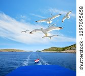 a flock of seagull flying... | Shutterstock . vector #1297095658