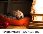 Dog Sleeping In His Orange Bad...