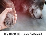 owner petting his dog  hands... | Shutterstock . vector #1297202215