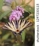 beautiful butterfly on... | Shutterstock . vector #1297233115