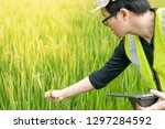 young asian male agronomist or... | Shutterstock . vector #1297284592