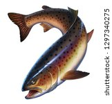 Rainbow Trout Fish On White...