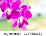 fresh crisp purple orchids... | Shutterstock . vector #1297500262