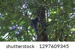 kedah  langkawi  malaysia   apr ...   Shutterstock . vector #1297609345