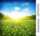 Blooming Potato Field Sun And...