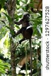 kedah  langkawi  malaysia   apr ...   Shutterstock . vector #1297627528