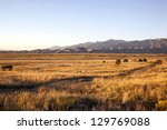 grasslands at sunset with the... | Shutterstock . vector #129769088