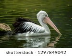 Beautiful pelican in the park....