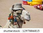 camel wearing a hat on a beach... | Shutterstock . vector #1297886815