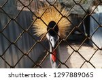 the bird is in the cage at the... | Shutterstock . vector #1297889065
