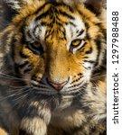 Tiger Tail - Fine Art prints